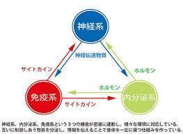サイトカインシステム