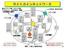 サイトカインネットワーク