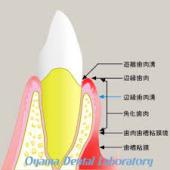 歯肉歯槽粘膜鏡